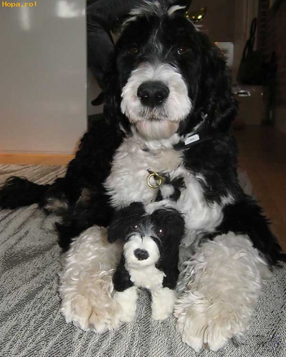 Animale - Tata si fiul