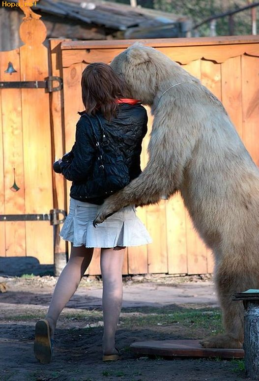 Animale - Ursuletul care se da la fete