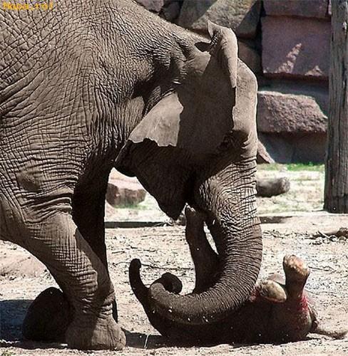Animale - La joaca