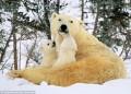 Animale - O familie fericita