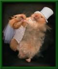 Animale - La nunta