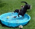 Animale - Uraaa ...o piscina!!!!!
