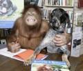 Animale - Hey, zambeste si tu