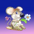 Haioase - O floare pentru tine