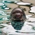 Animale - O foca suparata