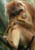 Animale - Of puiul mamii