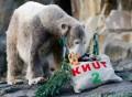 Animale - Knut