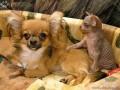 Animale - Doi prieteni
