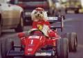 Animale - Pilot de formula 1