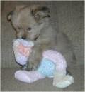 Animale - Teddy si jucaria lui preferata