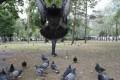 Iluzii - Omul porumbel