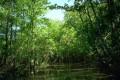Peisaje - Mlastina in mijlocul junglei