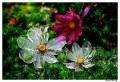 Flori - Flori din sticla