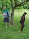 Animale - Dansez pentru tine draga mea stapana