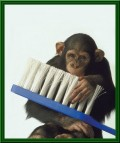Animale - Igiena este foarte importanta