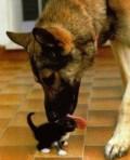 Animale - Spalatorie de pisici