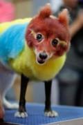 Animale - Papagal am vrut sa fiu de mic