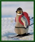 Animale - Echipat pentru iarna