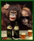 Animale - La o bere
