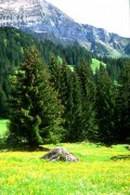 Peisaje - Vara la munte