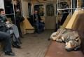 Animale - Tare obosit