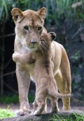 Animale - Te iubesc