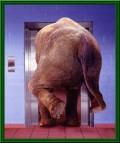 Animale - Mai bine iau liftul