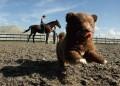 Animale - S-a speriat de cal