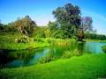 Peisaje - Verde crud