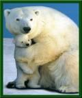 Animale - Mama ma protejeaza