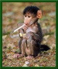 Animale - Asa de mic si fumeaza