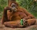 Animale - La o bere ca baietii