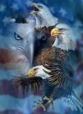Iluzii - Cati vulturi sunt?