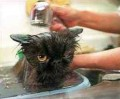 Animale - pisica la apa