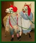 Animale - Gata de carnaval