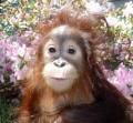Animale - Sunt frumoasa?