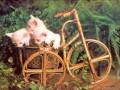 Animale - Trei pisici