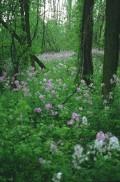 Flori - In padure
