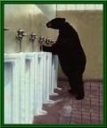 Animale - La toaleta publica