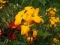 Flori - Micsunele
