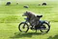 Animale - Oita pe motocicleta
