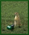 Animale - La tuns iarba