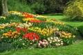 Flori - Gradina frumoasa
