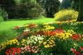 Flori - Gradina cu flori