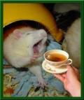 Animale - Cafeaua de dimineata