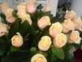 Flori - Cei mai frumosi