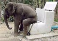 Animale - Si elefanti s-au emancipat