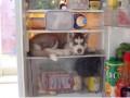 Animale - De paza in frigider