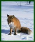 Animale - Nu imi place iarna