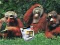 Diverse - Windows pentru maimute